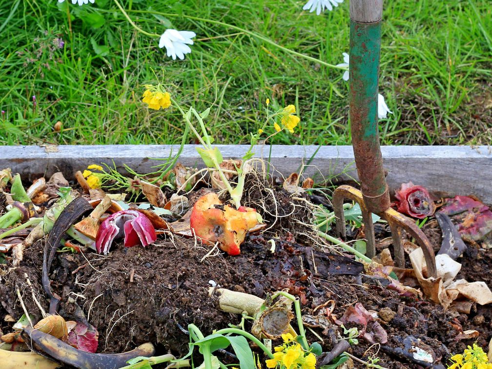 What Is Composting And Why You Should Try It